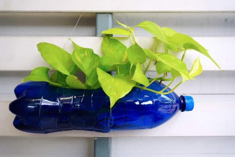 Do you have too many plastic bottles at home? Don't worry! Try out these few creative ways to reuse them!