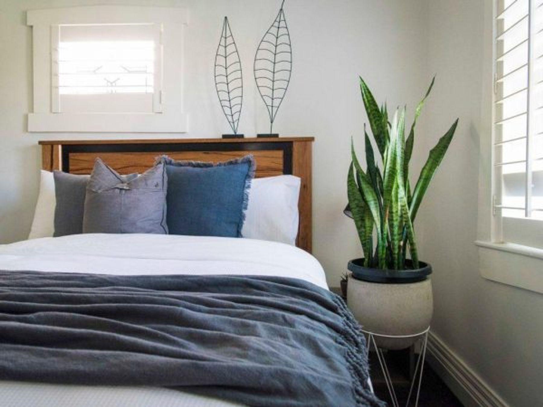 Đặt cây xanh trong phòng ngủ để khử mùi hôi phòng