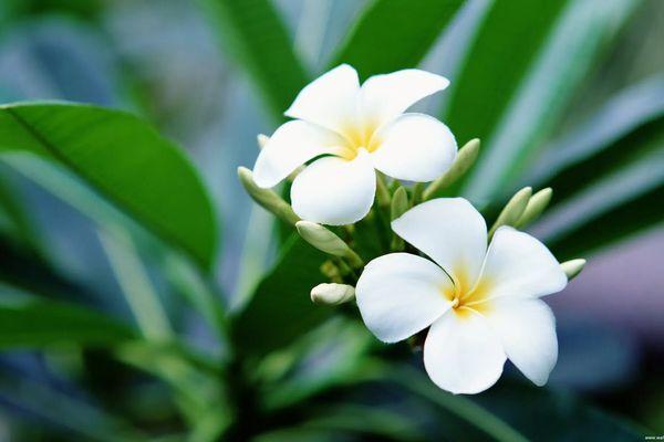 Những loại hoa đẹp, thơm nhưng tuyệt đối không nên chưng ngày Tết