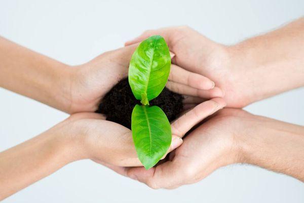 Lợi ích của việc trang trí cây xanh trong nhà