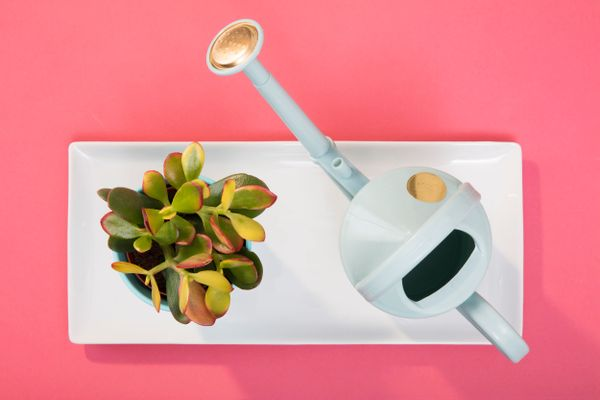 green living tips: white watering can and green potted plant on white tray and pink background
