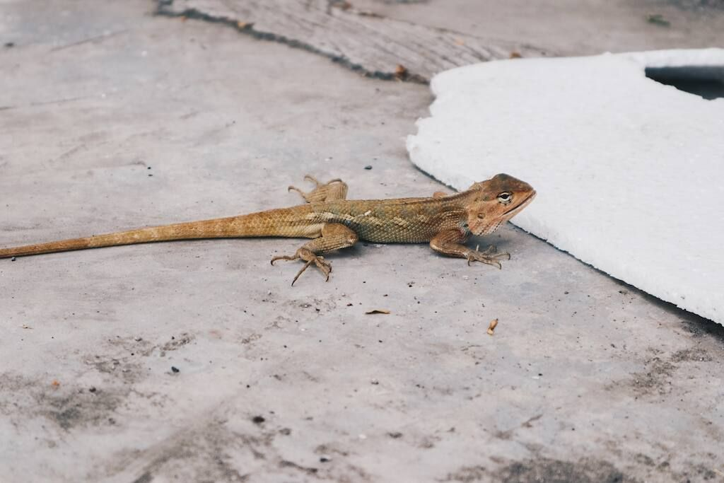 how to get rid of lizards on the floor