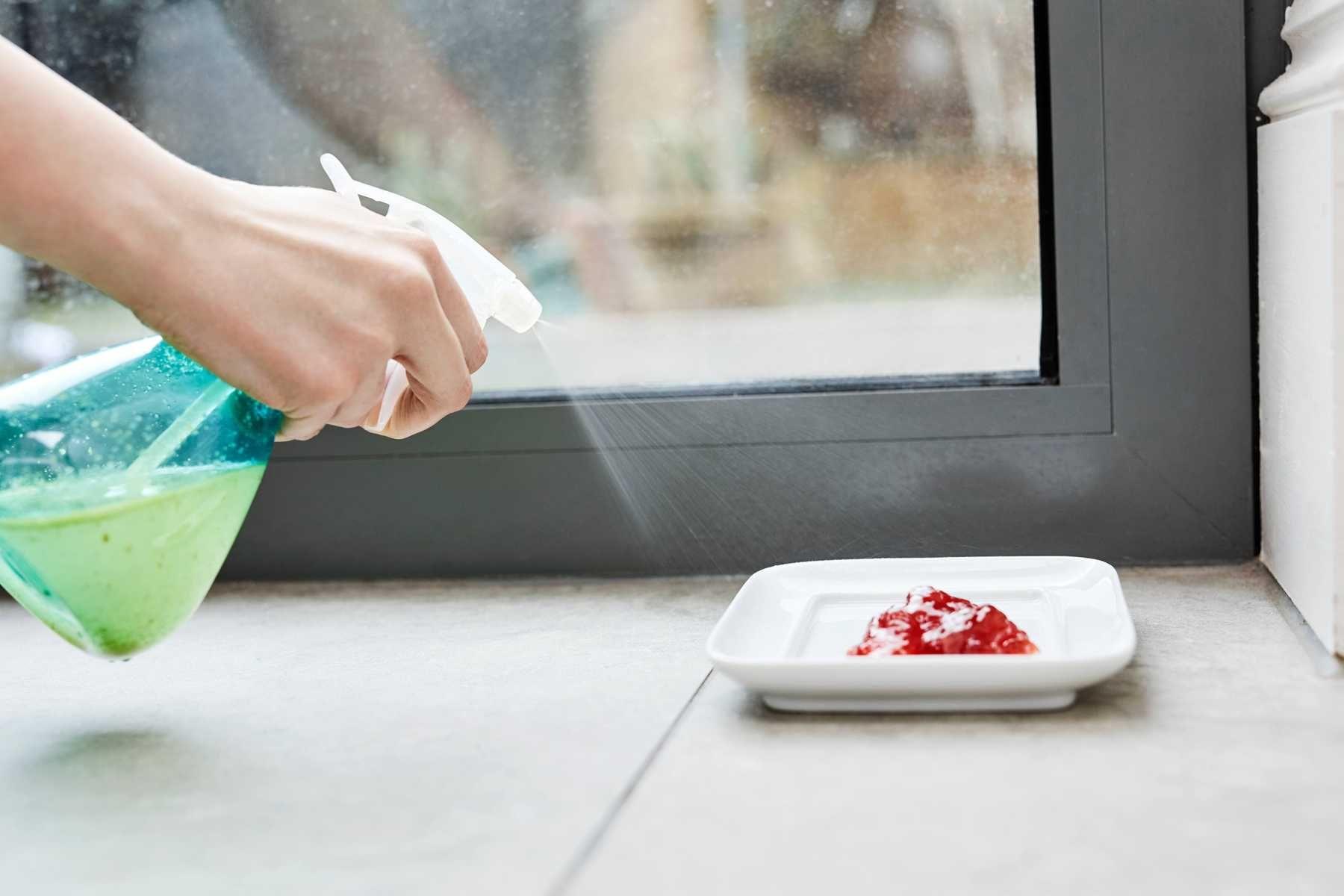 como-eliminar-formigas-da-cozinha-em-5-passos-simples