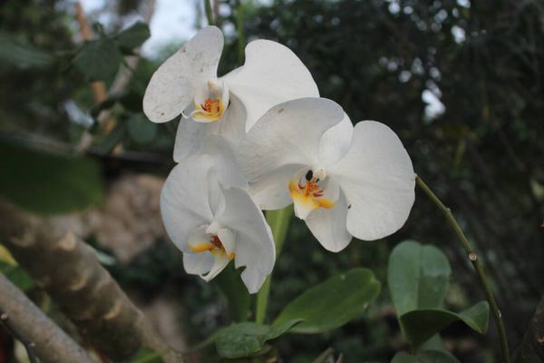 Orchid planting tips