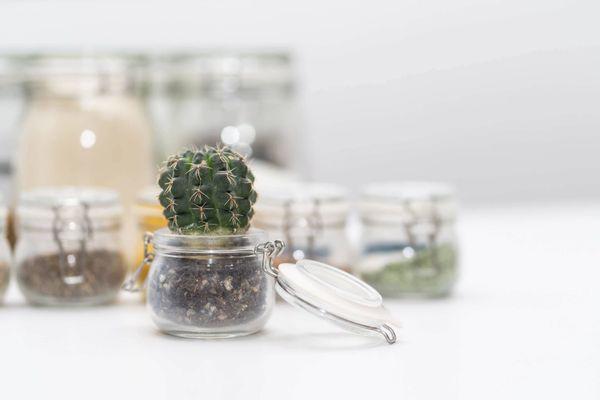 pots en verre réutilisés dans des pots avec un cactus au premier plan