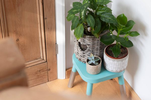 potted plant on a blue wooden bench by the door