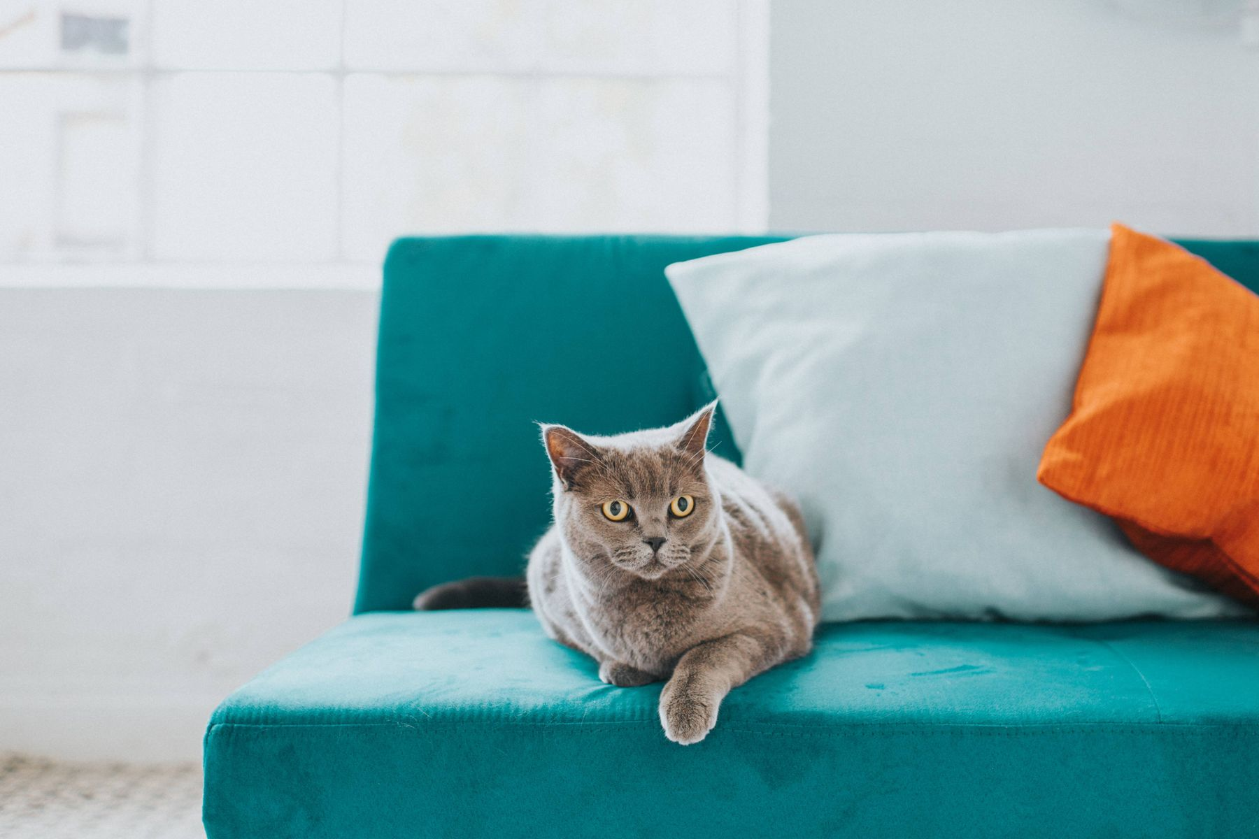 a grey cat sitting on a green couch