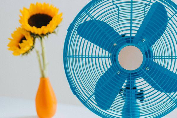 blauer Ventilator und Krug mit Sonnenblumen