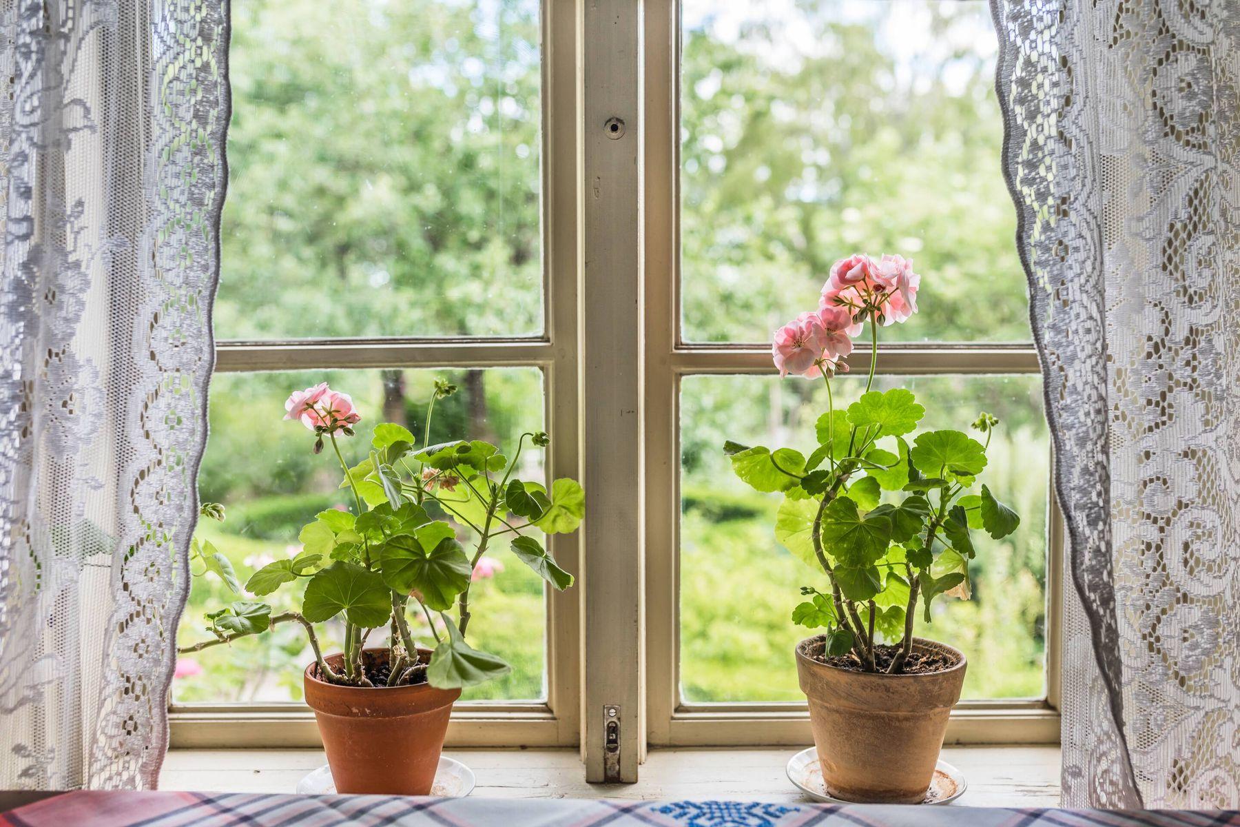 Evde Çiçek Bakımı Rehberi