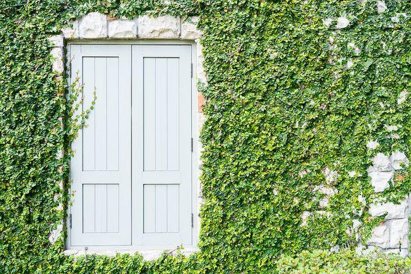 tanaman di dinding di sebelah pintu biru besar