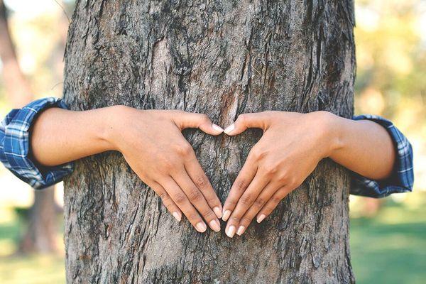persona abrazando un árbol