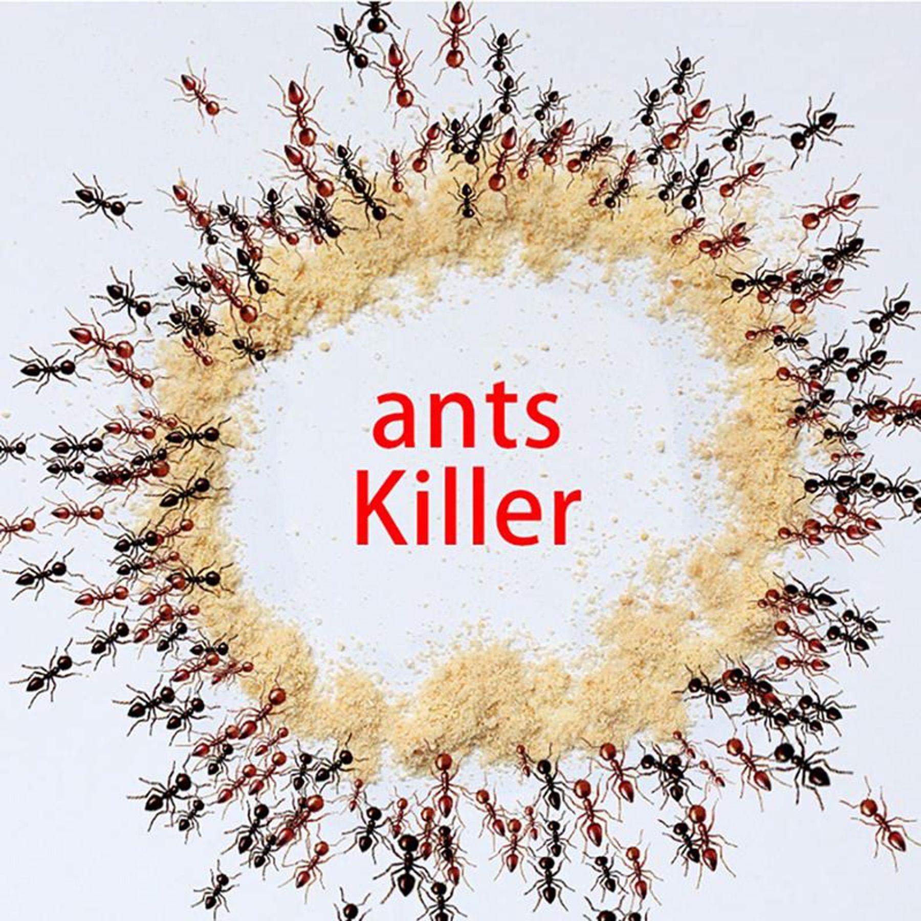 cách làm bẫy diệt kiến