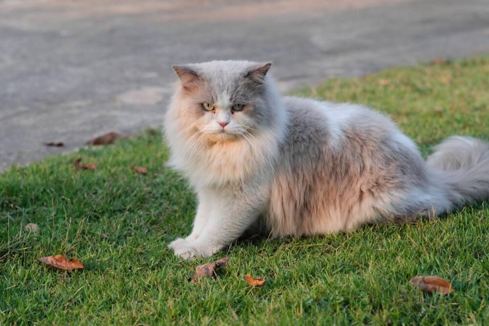 Kedi Evi Nasıl Yapılır?