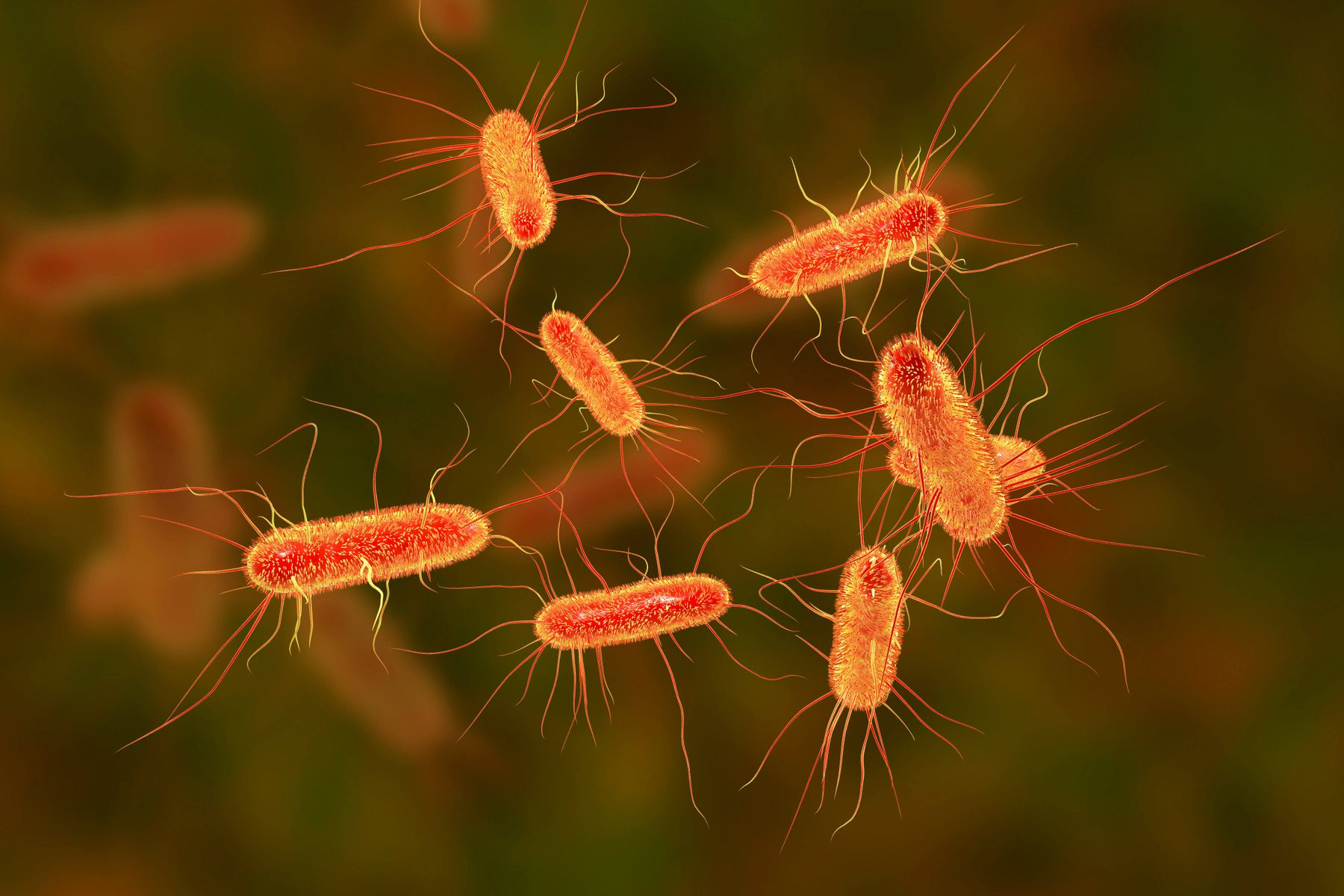 Harmful strain of E. coli