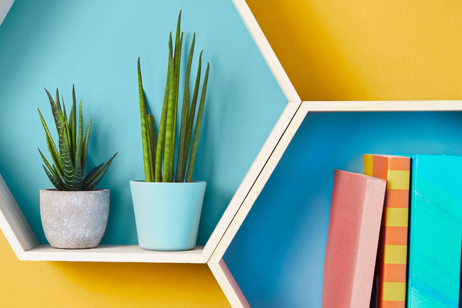 estantes hexagonales con libros y plantas en macetas