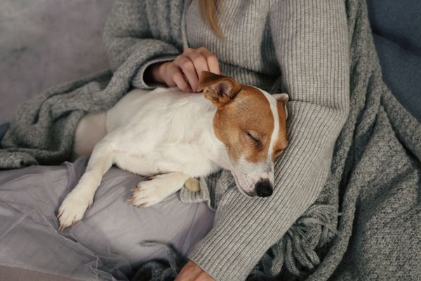 Woman in a grey merino wool jumper holding a sleeping dog