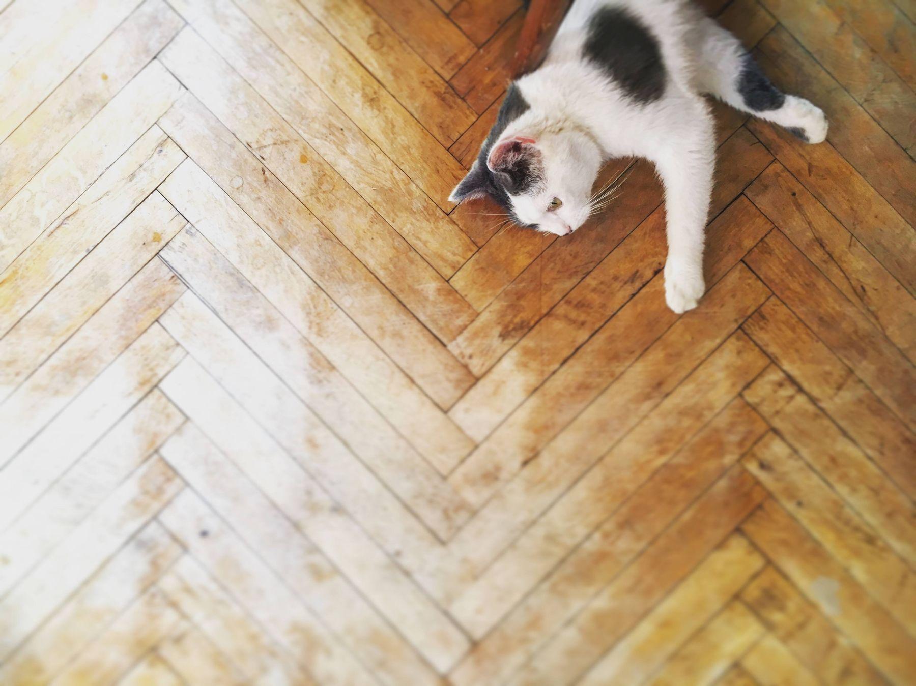 Kedi Sahiplenmeye Hazır mısınız?