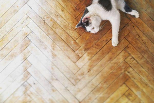 İdeal Kedi Yatağı Nasıl Olmalı?