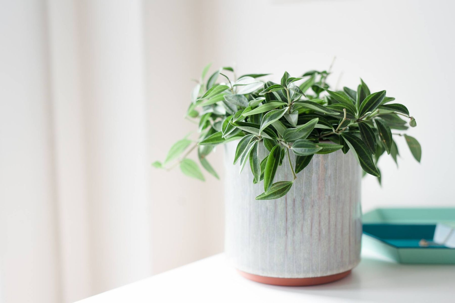 plant in white ceramic pot