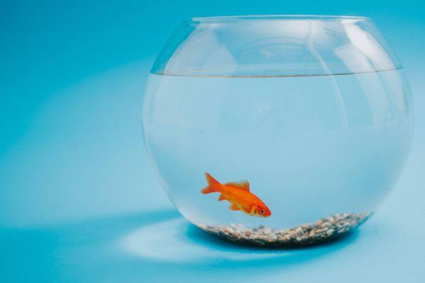Seekor ikan dalam wadah kaca