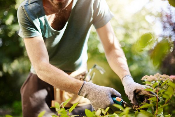 The Best Gardening Practices | Ways to Keep Garden Healthy | Get Set Clean