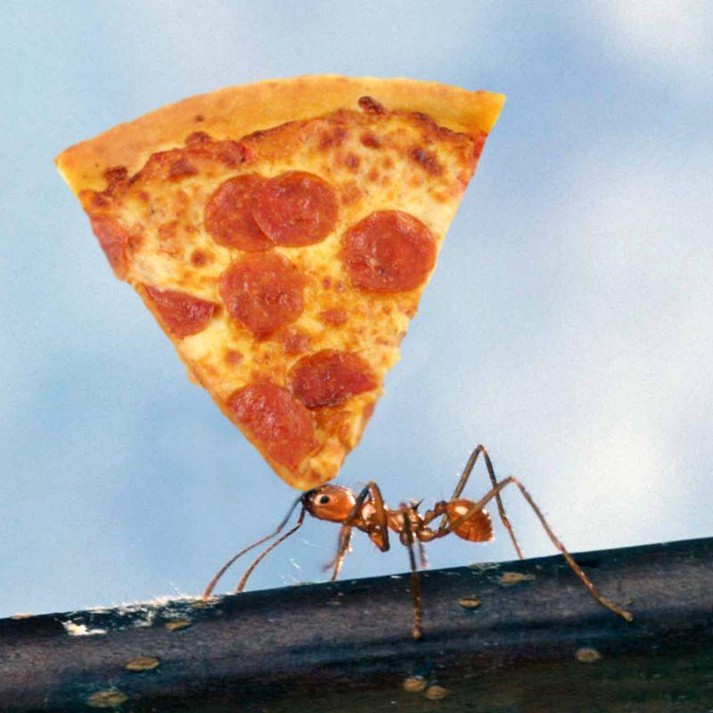 cắt đứt nguồn thức ăn của kiến
