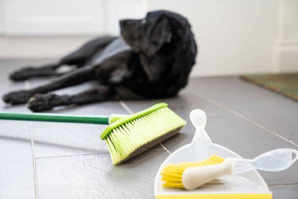 luuta ja pölykato lattialla koiran vieressä