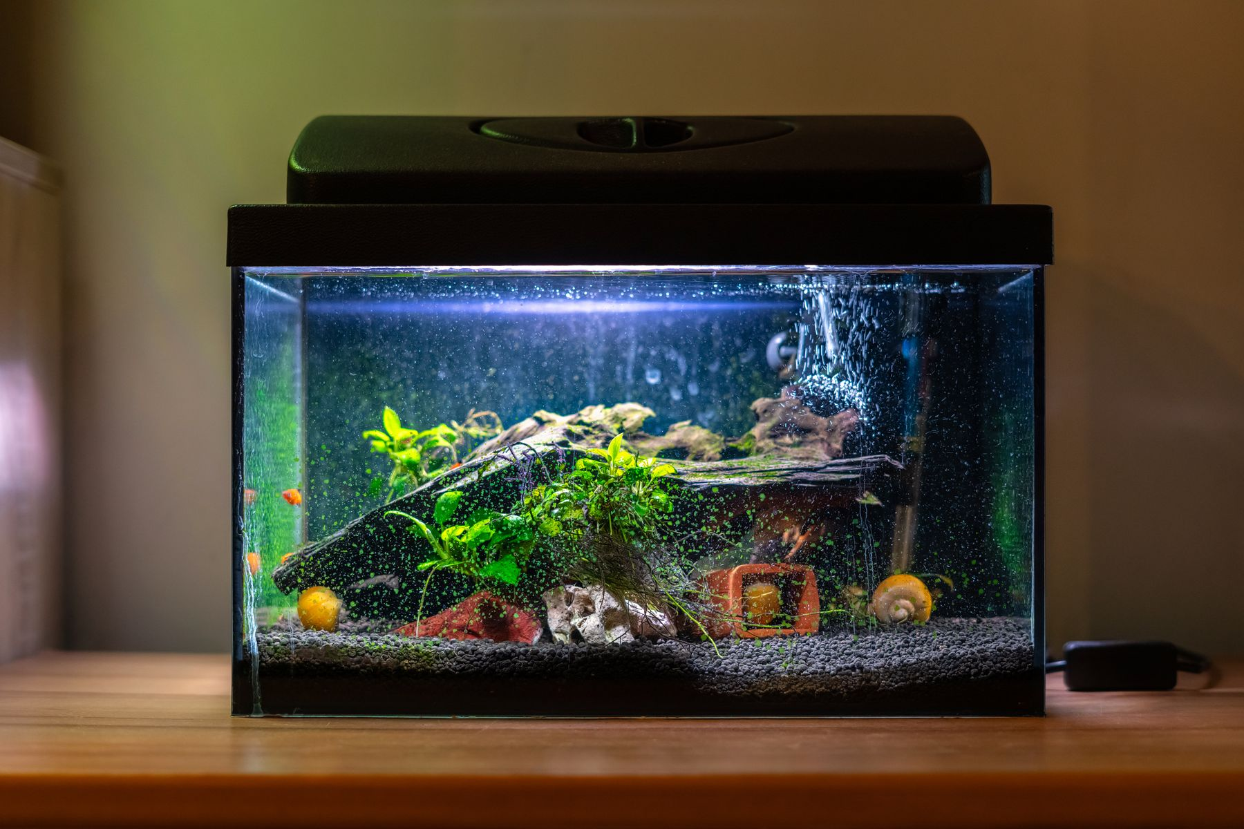 colourful fish tank sitting on a wooden surface