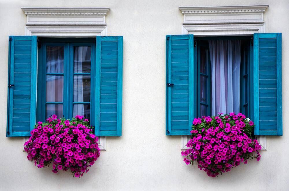 Tanaman Gantung yang Cocok Sebagai Penghias Atap Rumah