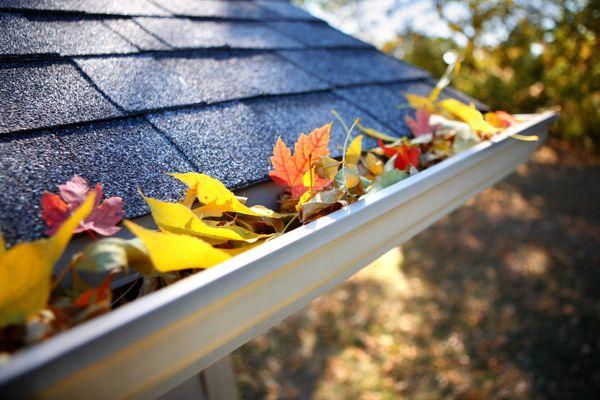 feuilles d'automne sur le toit