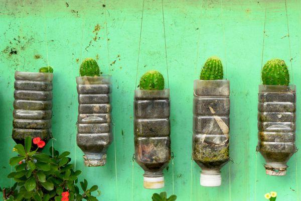 cactus plantés dans des bouteilles en plastique recyclé suspendues au mur