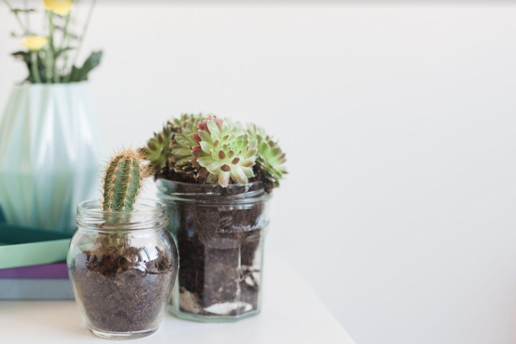 Cómo cuidar cactus y suculentas correctamente