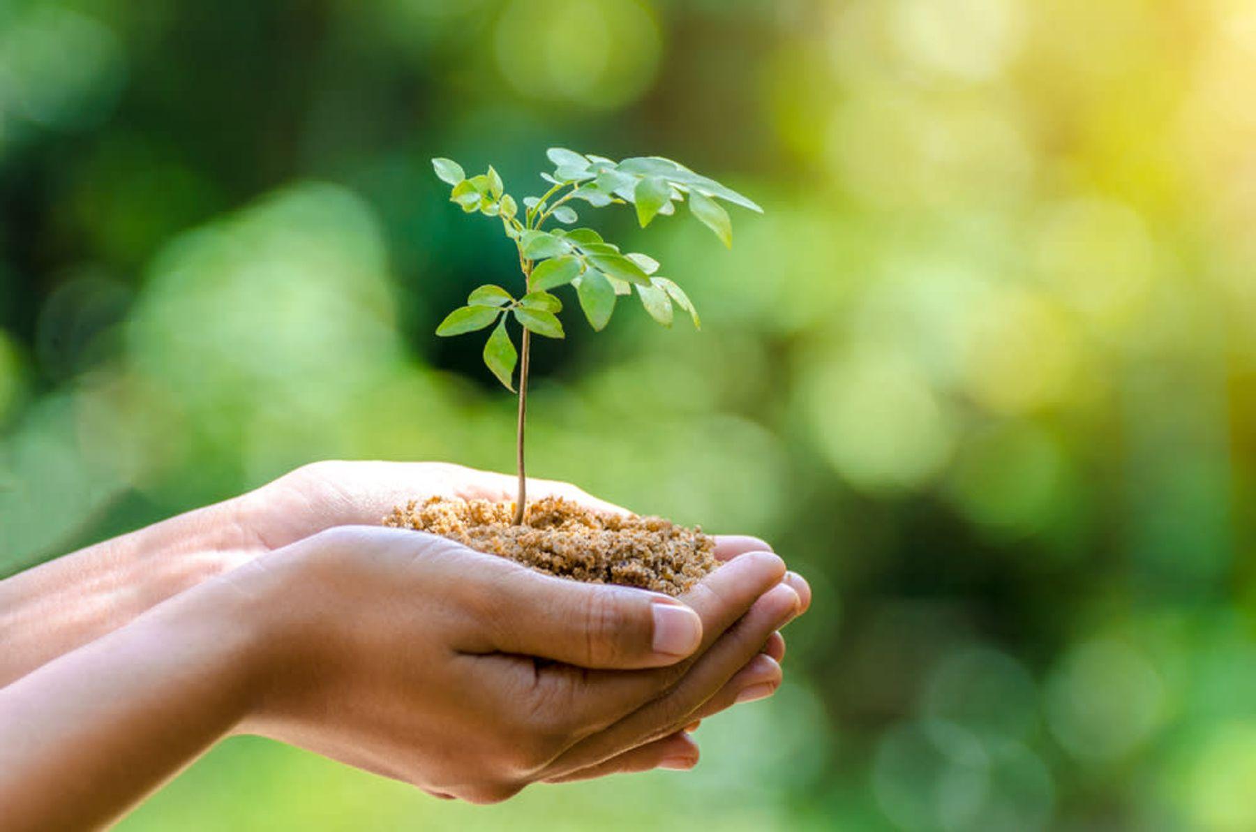 Yeşil Doğa ve İnsan Eli