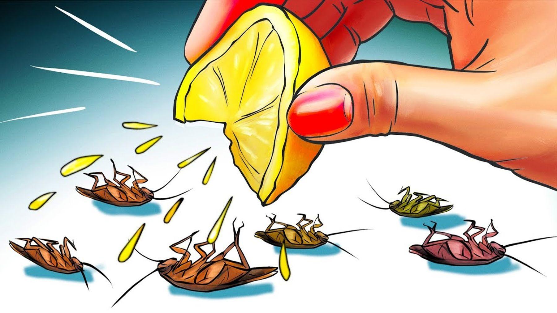 Cách diệt gián bằng vỏ chanh, cam có thể áp dụng ở mọi ngóc ngách trong nhà | Cleanipedia