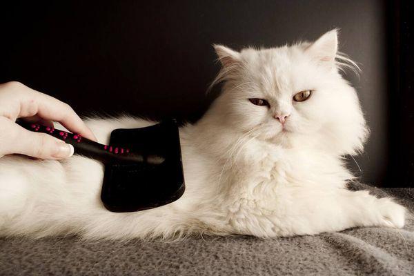 Kedi Bakımında Bilinmesi Gerekenler