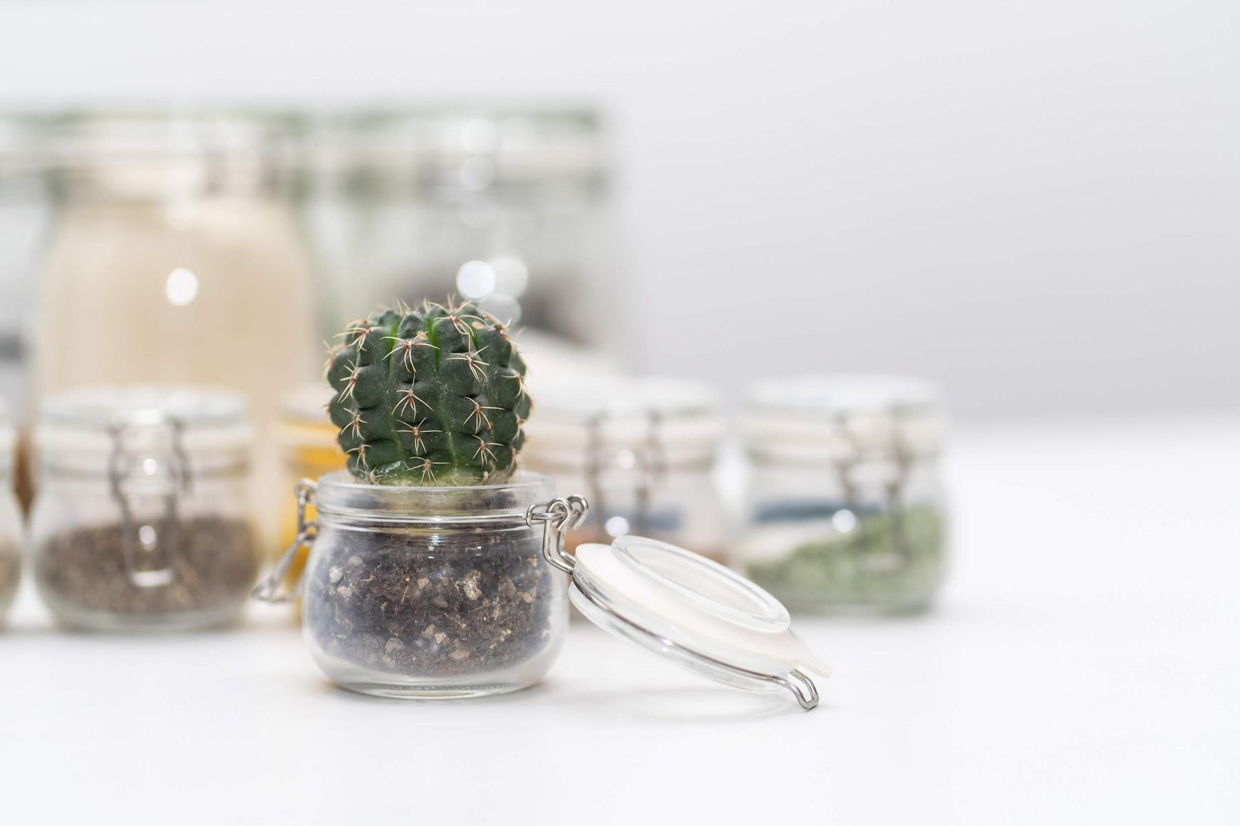muda de cacto em um vaso de vidro transparente