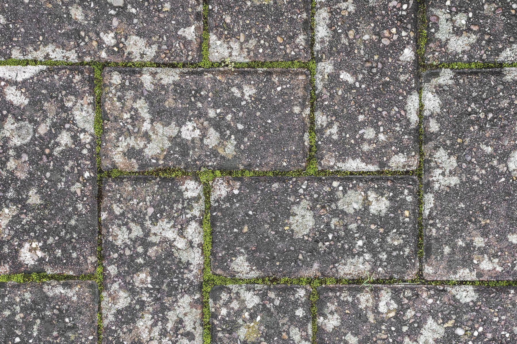close up of moss on a driveway