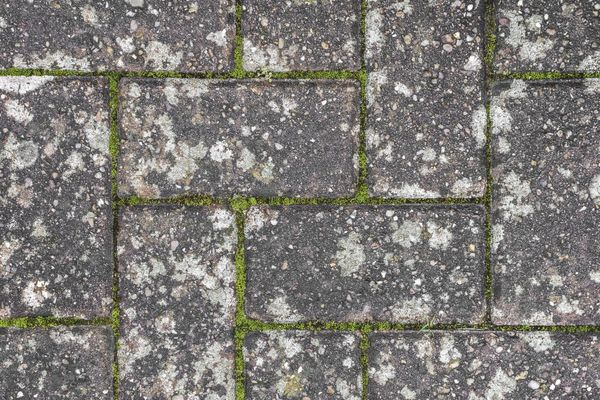 close up of moss on a driveway