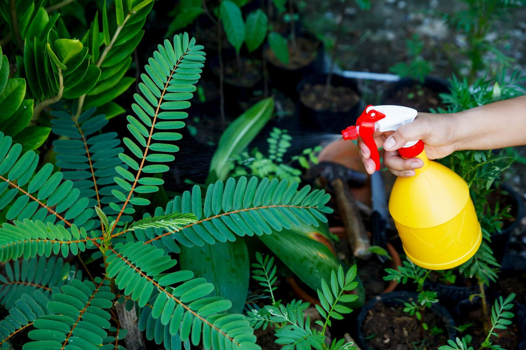 Consejos para usar insecticidas naturales
