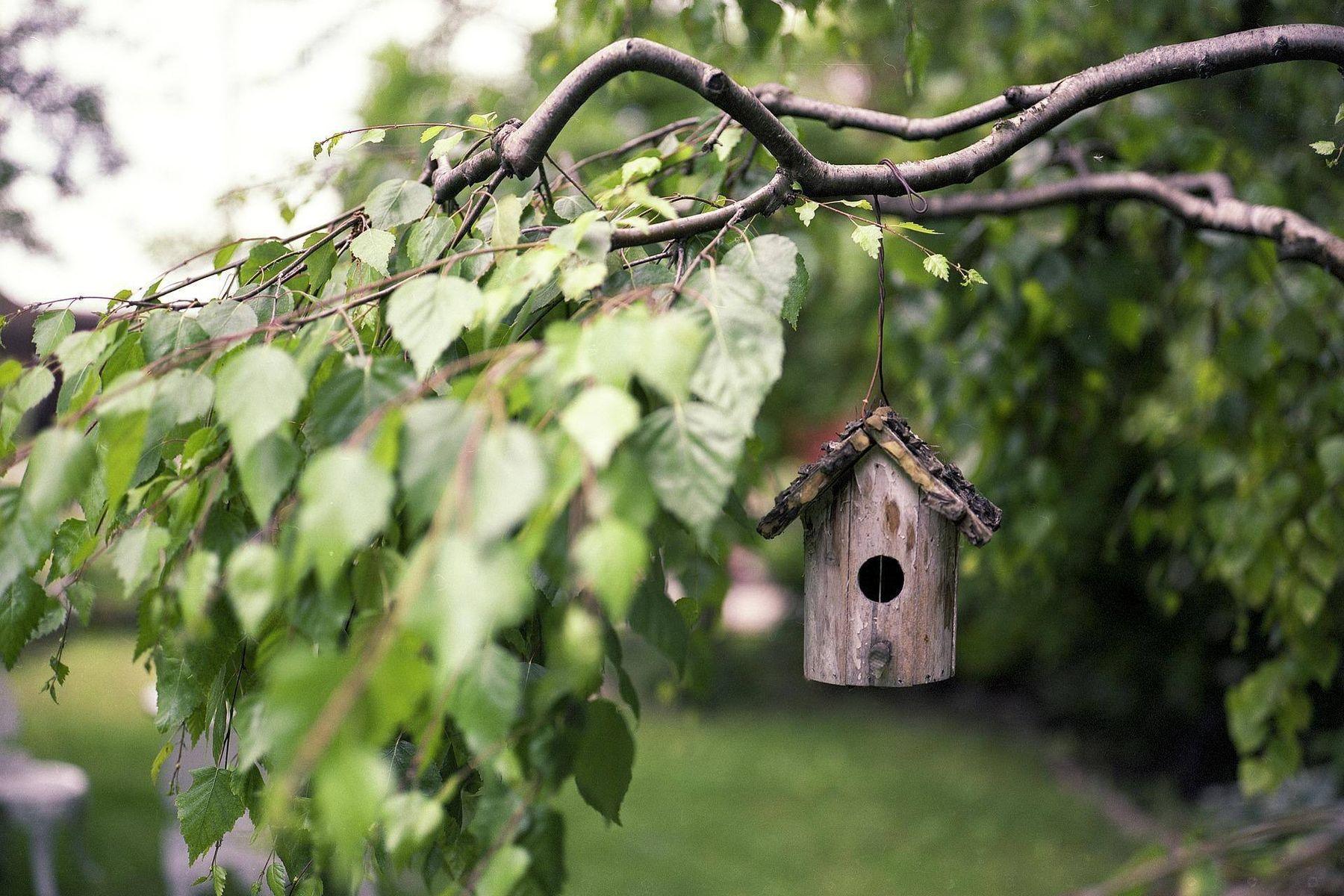 Vogelkäfig an einem Baum hängen