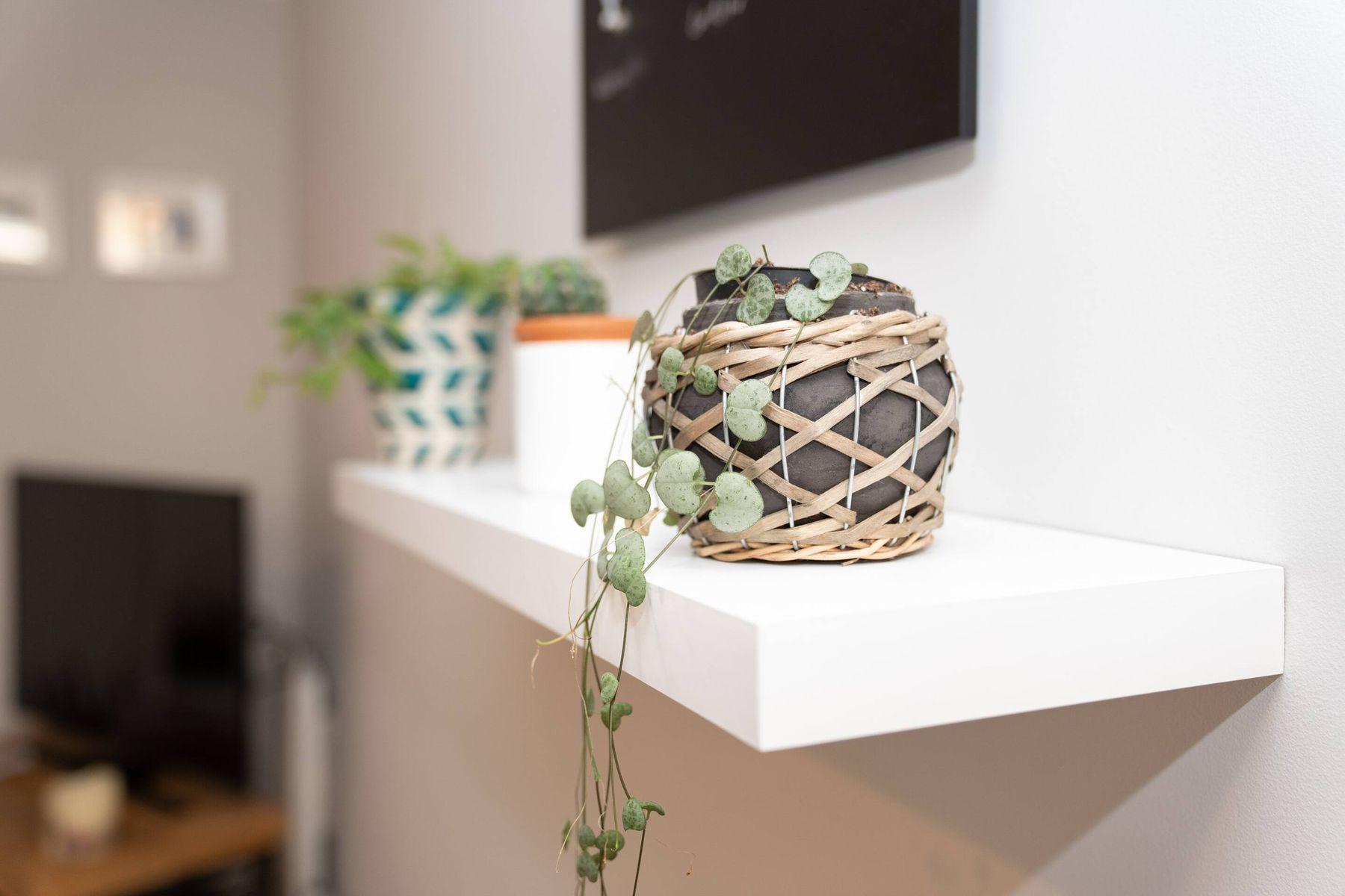 rośliny doniczkowe na półce