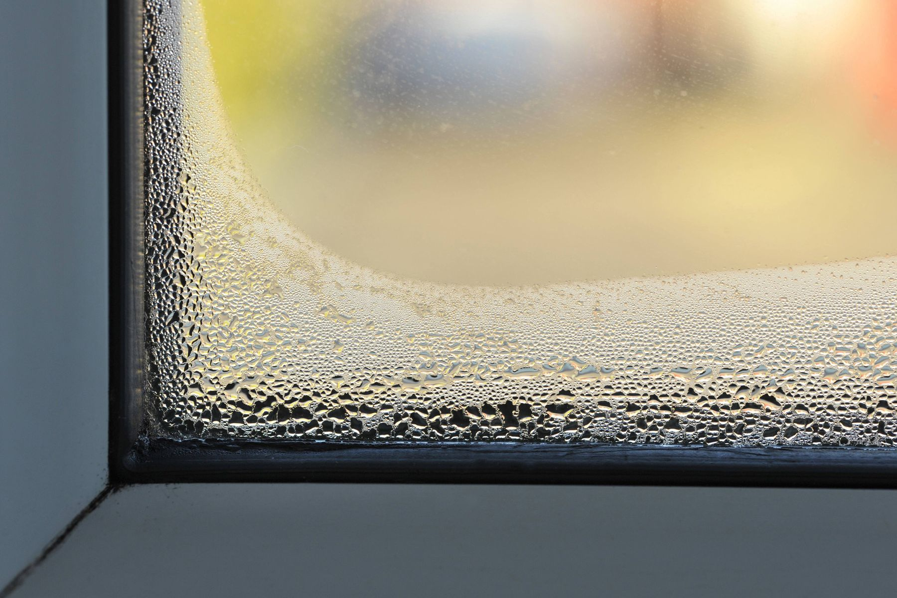 how to get rid off slugs, windon condensation