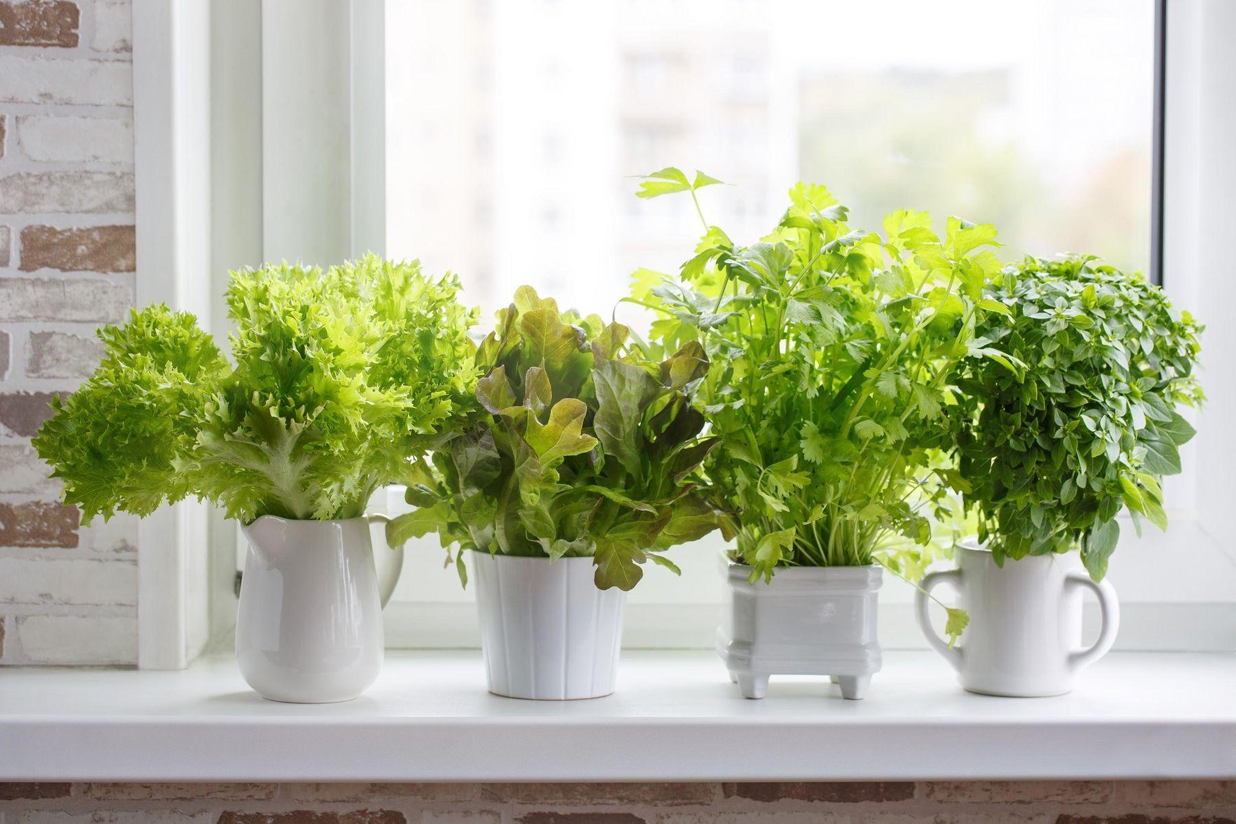 Step 3: Vasinhos decorativos com ervas na janela