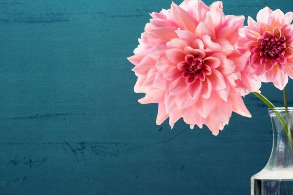 Cắm theo cách này, hoa sẽ tươi suốt mùa tết