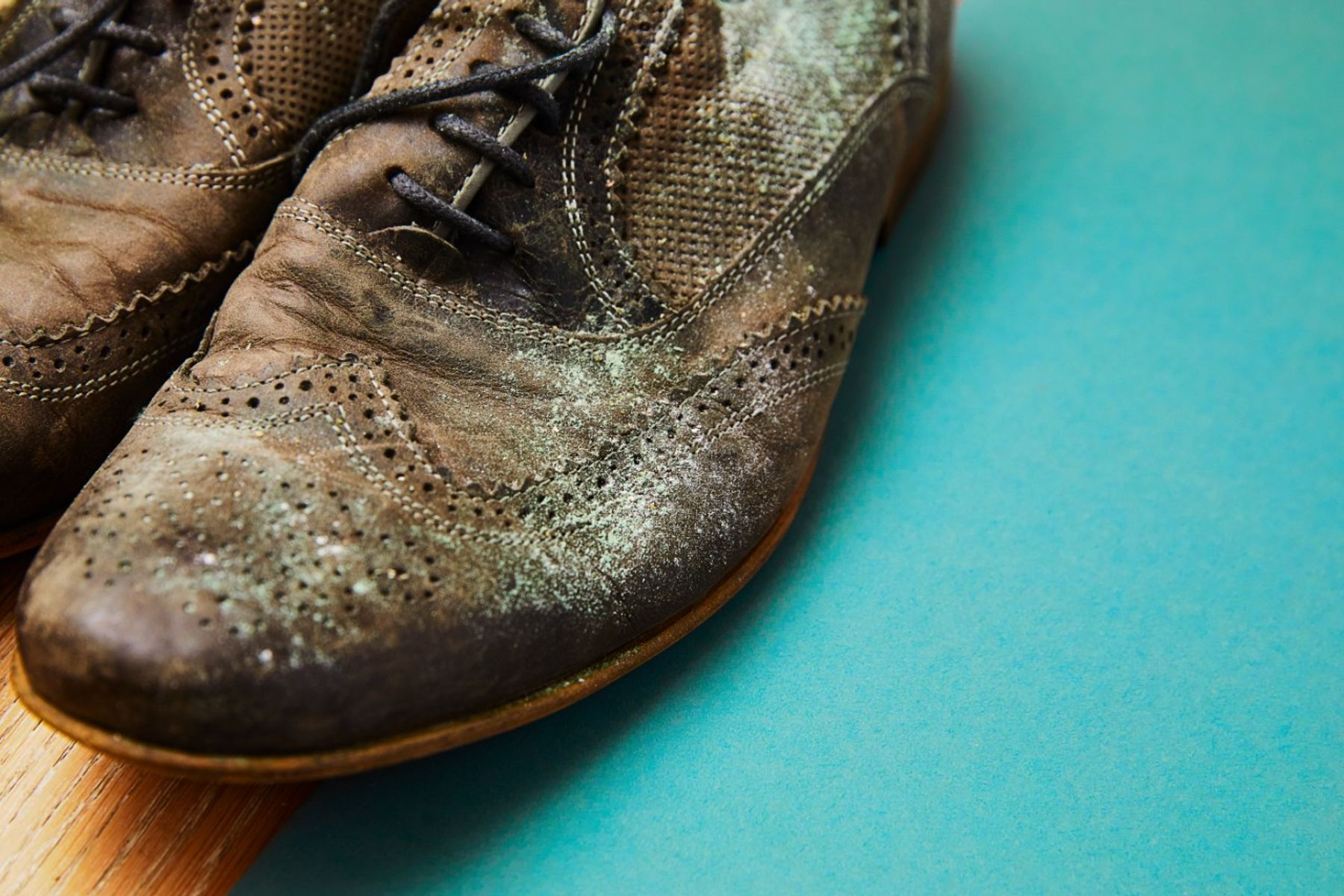 Pair of brown shoes growing mould on the leather against a blue background, causing a damp smell in the house