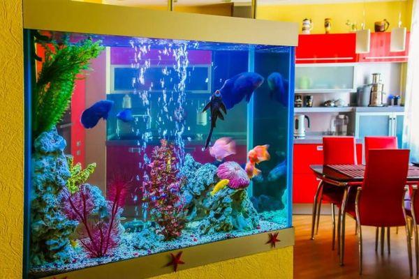 Akvaryum ve İçerisinde Renkli Balıklar