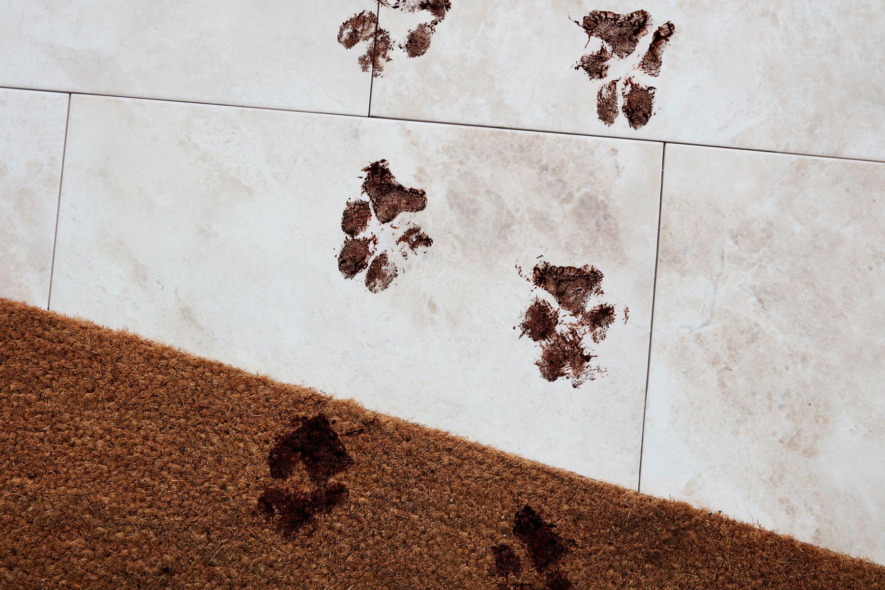 Seramik zemin üzerinde çamurlu pati izleri