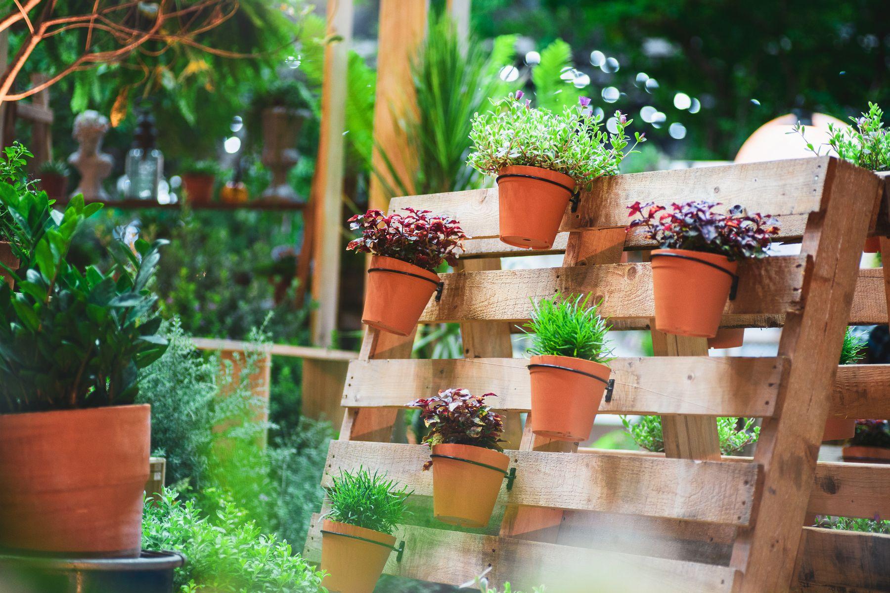 Vasos de planta em paletes