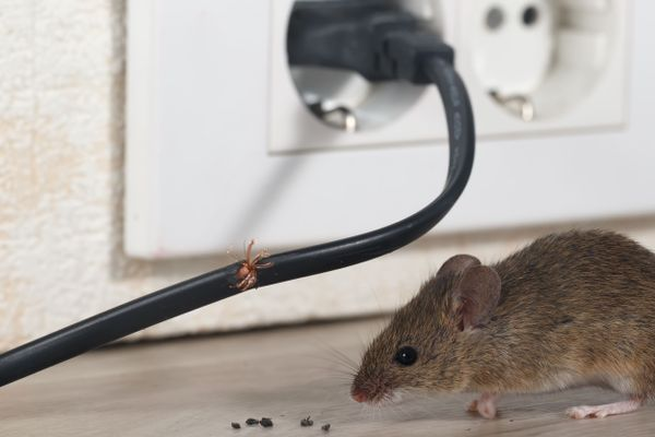Are rats chewing up your Washing Machine wires? Here's how you can easily protect your Washing Machine from rats!