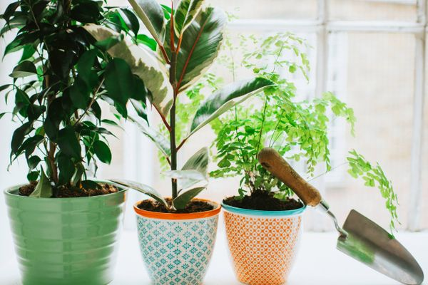 three plants in colourful pots